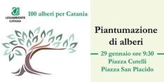 100 alberi per Catania- Seconda piantumazione della stagione