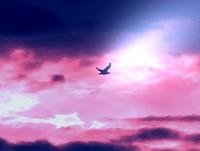 Volare verso l'orizzonte infinito. Sognare senza steccati e gabbie