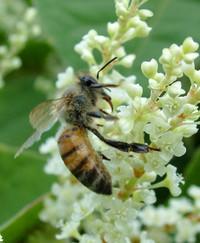 La morte delle api
