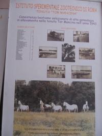 Pannello che descrive la  consistenza del bestiame selezionato di alta genealogia allevato nella Tenuta di Tor Mancina nell'anno 1943. Foto bestiame