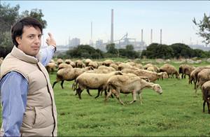 Un gregge di pecore, sullo sfondo una ciminiera