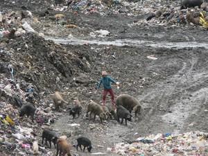 Bambini e maiali si litigano gli avanzi nella discarica gestita da VOLCAN