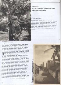 Diario. Chisimaio Sabbetta lavoro come fitopatologo per la Società Agricoltori del Giuba ( 6° eccdio di Chisimaio)