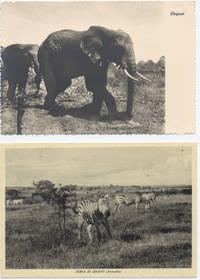 Foto elefante e zebre somali(7° Alias Mohamed nella boscaglia somala)
