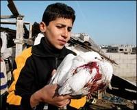 Un bambino con in mano una colomba insaguinata. Come Rachel, colomba di Pace in una Terra insanguinata.
