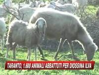 L'annuncio dell'abbattimeno delle pecore