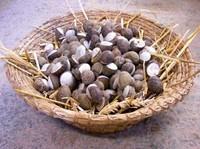 Diossina nelle lumache del tarantino