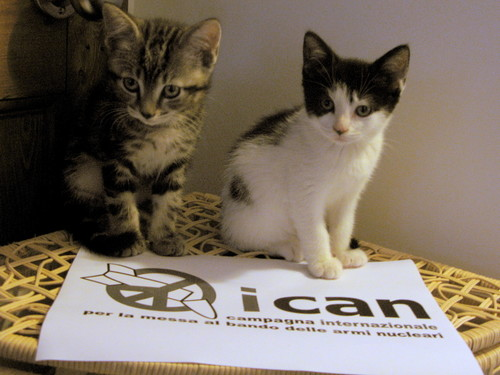Kittens against Nuclear Weapons