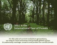 Le foreste sono amiche più preziose di quanto pensiamo