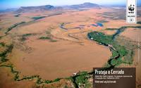 La deforestazione della Savana Tropicale in Brasile tende a diminuire