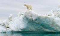 Lo scioglimento dei ghiacci artici sta causando il rilascio di tossine nocive nell'ambiente.