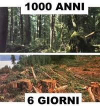 Ci vigliono Mille anni per veder crescere una foresta, ma bastano pochi giorni per distruggere tutto un ecosistema