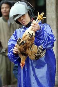 Una tragedia non solo per i polli