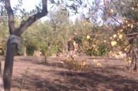 Cartucce contro olive