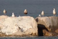 Certo uno sversamento in adriatico: gli ambientalisti chiedono chiarezza