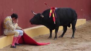 L'incredibile fine della carriera del Matador Torero Alvaro Múnera. Si accasciò nel rimorso a metà lotta, quando si rese conto di dover istigare alla reazione un toro altrimenti docile. Oggi si oppone fortemente alle corride. Lo sguardo sul volto del toro dice tutto: anche se gravemente ferito dai picadores, non attacca l'uomo.