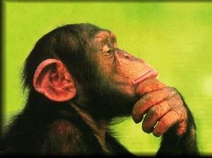 scimmie pensanti