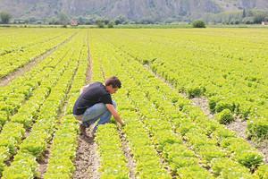 Ci sono fondi europei per i nuovi agricoltori sotto i 40 anni