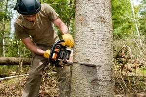 Taglio di alberi