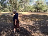 Enza Pagliara ha raccontato la storia degli ulivi piantati da suo nonno a Torchiarolo