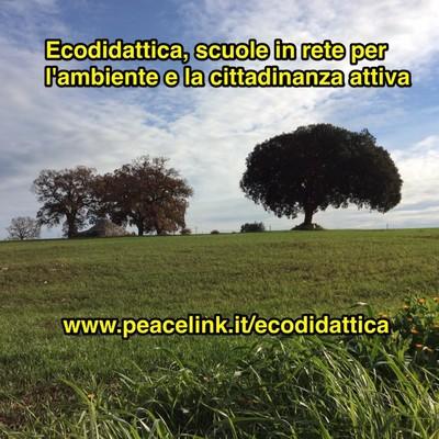 Il progetto Ecodidattica
