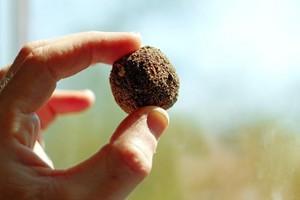 Seme di argilla essiccata, contenente semi di vario tipo, utilizzato in agricoltura naturale.