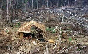 Una piccola capanna nel bel mezzo di un mare di alberi abbattuti. I gruppi ambientalisti internazionali hanno chiesto interventi urgenti per ridurre la deforestazione della giungla amazzonica del Brasile. Circa 23.750 chilometri quadrati di foresta sono s