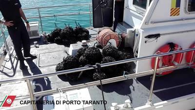 Cozze del primo seno del Mar Piccolo di Taranto sequestrate a settembre 2017