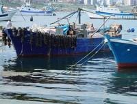 Quanta diossina c'è ancora nelle cozze di Taranto?
