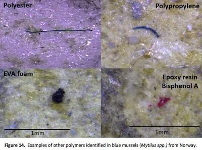 Microplastiche nelle cozze