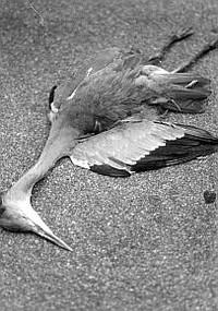 Una delle tente vittime della caccia