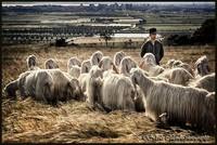 Il sorriso 'ricciolo' di Vincenzo Mero e il sogno del pastore scientifico