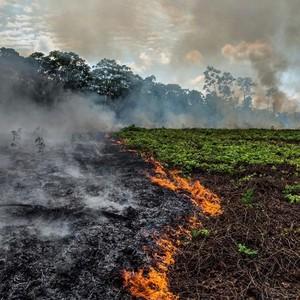 I polmoni della terra bruciano