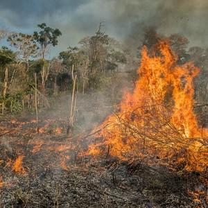 Un dettaglio dell'immenso incendio nella Foresta Amazzonica