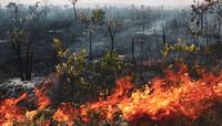 Amazzonia brasiliana: sono in tanti a volerla distruggere