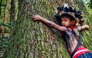 Indios a difesa della foresta