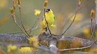 Uccelli a rischio estinzione