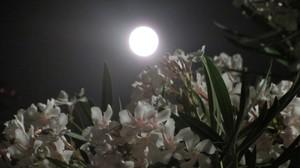 La luna, lassù