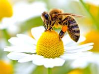 Fermiamo la moria degli insetti