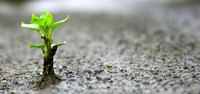 Il principio speranza