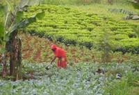 Amahoro (pace) in Burundi