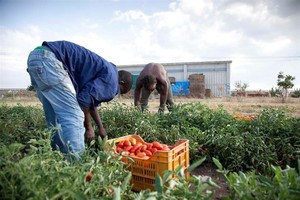 Migranti sfruttati nelle campagne