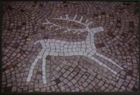 L'uomo primitivo era 'ecologo'?