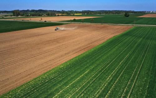 Campi di grano a Rammingen nell'Unterallgäu. Se le persone consumassero meno prodotti animali e coltivassero in modo più efficiente, le emissioni di gas serra del settore agricolo potrebbero diminuire in modo significativo.