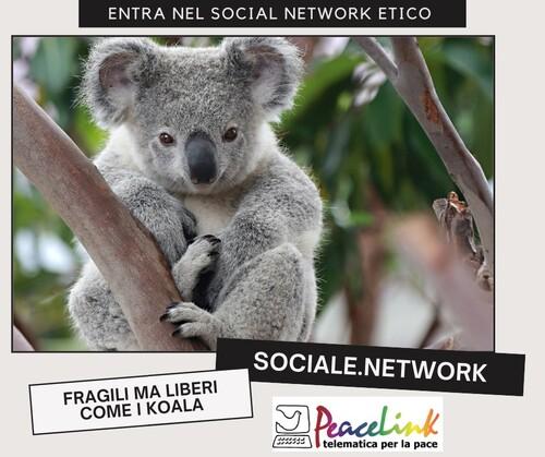 Sociale.network è la piattaforma etica e senza pubblicità su cui stiamo portando associazioni, cittadini, iniziative e campagne per la pace, la solidarietà e l'ecologia. Abbiamo scelto il koala come simbolo di ciò che vogliamo tutelare: la biodiversità, la libertà e la fragilità.