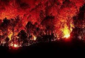 Colpo di spugna per gli ecoreati mentre i boschi bruciano