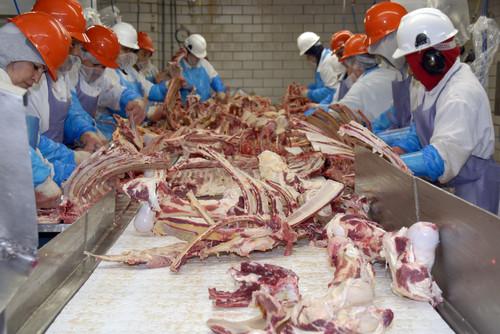 Lavoratori nel macello di manzo L & H di San Antonio, Texas, mentre sporzionano le parti di manzo. Gli ispettori del Dipartimento dell'Agricoltura degli Stati Uniti sono sul posto per garantire che la carne bovina venga lavorata in conformità con le normative.