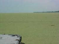 Venezuela: emergenza ecologica nel lago di Maracaibo
