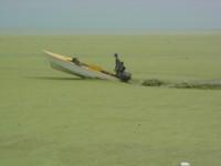 l'effetto dell'alga sulla superficie de lago