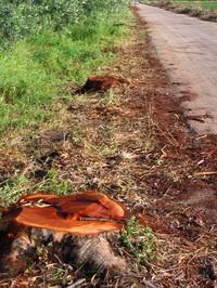 """La """"deforestazione amazzonica"""" in provincia di Foggia continua!"""